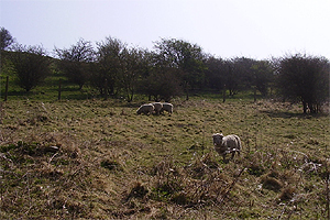 Sheepatwaterhall
